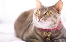 ¿Por qué es mejor no poner un cascabel en el gato?