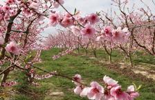 Tres rutes per viure l'espectacular exclat de les flors de la primavera