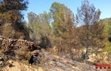 Ocho vehículos de Bombers trabajan en un incendio entre Corbera d'Ebre y Gandesa