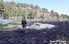 Cremen 600 metres quadrats de vegetació a Miravet