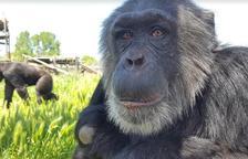 Cinc llocs on portar als nens per aprendre més sobre els animals