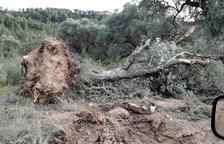 Denuncien danys pel pas de maquinària de l'empresa que construeix l'abocador de Riba-roja