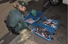 Intervenen 121 quilos de peix fresc preparat per a la venda il·legal