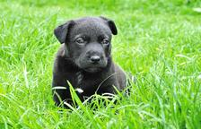 L'inesperat perill pel nostre gos durant la primavera