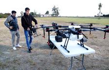 Comencen a utilitzar drones per espantar els flamencs dels arrossars al delta de l'Ebre