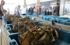 El delta de l'Ebre, porta d'entrada a Europa d'espècies invasores que ataquen l'ecosistema i el sector primari