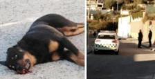 Un policía local de Calafell, a un paso de ir a juicio por matar a un perro que lo atacó