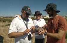 Comença l'anellament de gavina corsa al Port de Tarragona