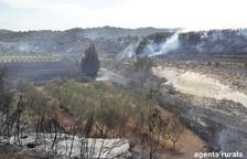 Estabilizado el incendio de Batea, que ya crema 20 hectáreas