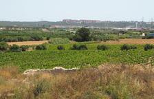 L'ICAC investigarà un jaciment romà dedicat al vi al Mas dels Frares de Constantí