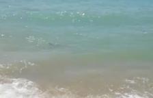 Apareixen dues tintoreres a la platja de Roda de Berà
