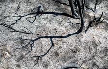 Els Bombers eviten que l'incendi creixi en extensió i són optimistes