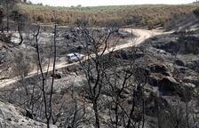 Extingit l'incendi de la Ribera d'Ebre onze dies després