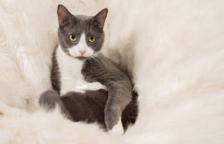 Com fer famós al teu gat o gos a Instagram?