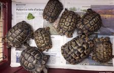 Agents Rurals recull vuit exemplars de tortuga móra a Flix