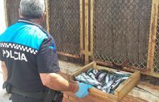 Decomissen més de 3 quilos de peix al Mercat Setmanal de Cunit