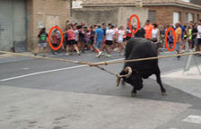 Santa Bàrbara posa fi al bou capllaçat infantil després d'una denúncia d'AnimaNaturalis