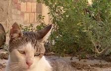 Denuncien la mort d'un gat d'una colònia controlada a causa de l'atac d'un gos