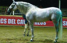 Unos 60 caballos, en el Campeonato de Morfología de pura raza Española
