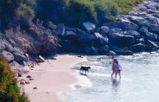 Roda de Berà obre a la Cala Torrota la setena platja per a gossos a Tarragona