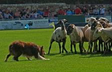 Èxit de participació i d'espectadors en la XXXII edició del Concurs de Gossos d'Atura a Prades