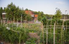 L'Ajuntament sortejarà 24 parcel·les d'horts urbans a Sant Salvador