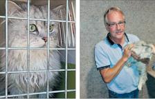 Clochette, la gata 'turista' que es va perdre al Mèdol i ha tornat a Bèlgica