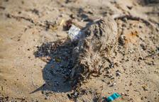 Ratas muertas en la playa del Miracle y bolas de plástico en la Arrabassada