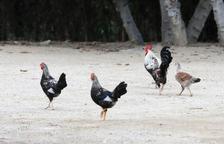 La ciutat de Tarragona normalitza en pocs anys les colònies d'animals