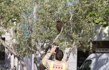Bombers han retirat 13 nius d'abelles aquest estiu a Reus, la meitat que l'any passat
