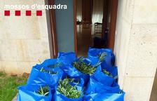 Desarticulat un grup d'origen serbi que cultivava i traficava amb marihuana al Catllar