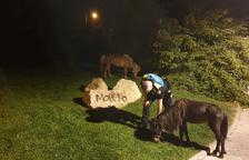 Los poneys encontrados en Reus habían sido robados
