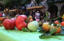 La I Fira de la Tomaca del Priorat expone una cuarentena de variedades de esta hortaliza a Falset