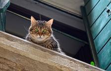 Com evitar els perills de la 'síndrome paracaigudista' dels gats
