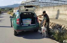 Els Agents Rurals localitzen un gos de raça potencialment perillosa solt a Amposta