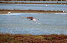 Més enllà de l'observació d'ocells: el Delta Birding Festival fa bandera del turisme de natura i la sensibilització