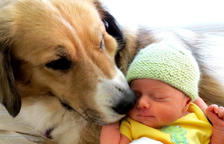 ¿Qué hay que saber cuando llega un bebé a una familia con perro?