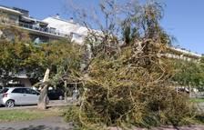 Els Bombers han rebut més de 400 avisos a la província de Tarragona durant l'episodi de vent