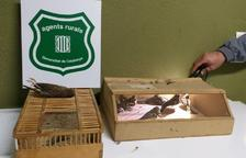 Denuncien dues persones per caçar ocells amb mètodes prohibits al Montsià
